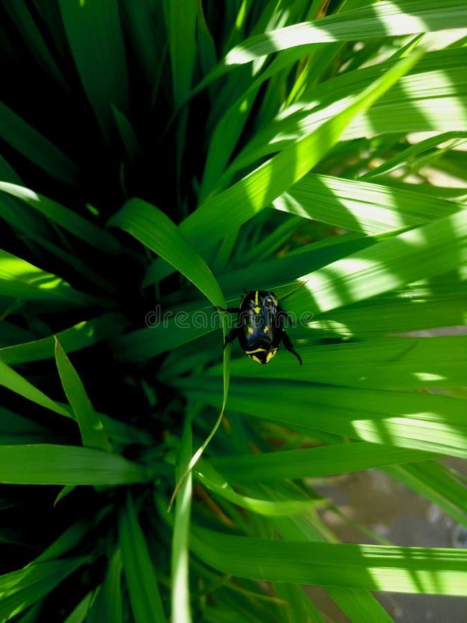 Czarny insekt z żółtymi ocechowaniami fotografia stock