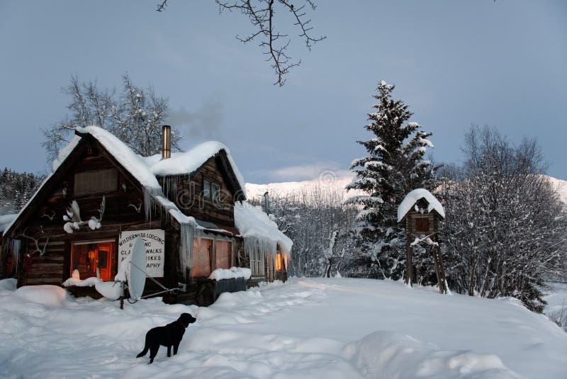 czarny kabiny psa beli wilds fotografia royalty free