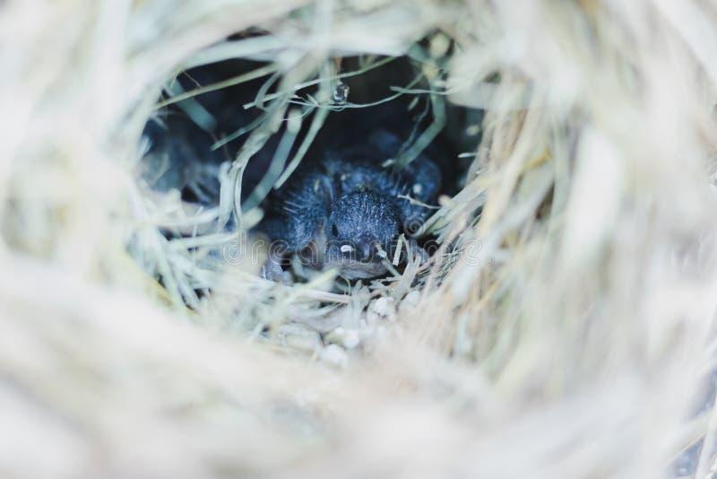 Czarny klapier w siatce ptasich ptaków fotografia stock