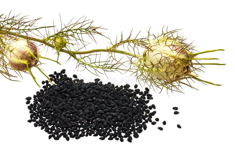 Czarny kmin z ziarno liśćmi i strąkami, fotografia royalty free