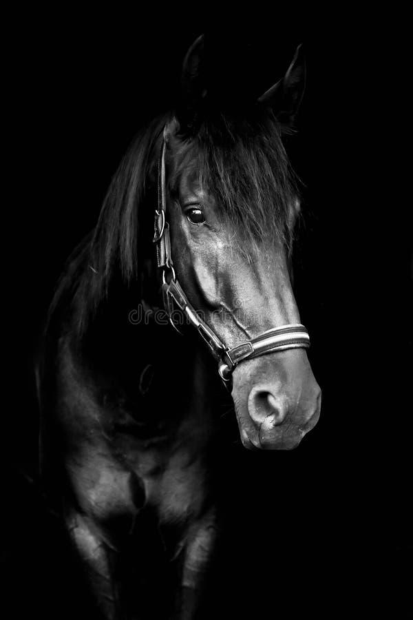 Czarny koń na czarnym tle zdjęcia stock