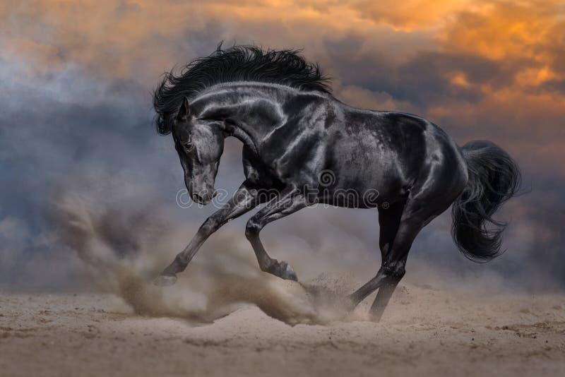 Czarny koń w ruchu fotografia stock