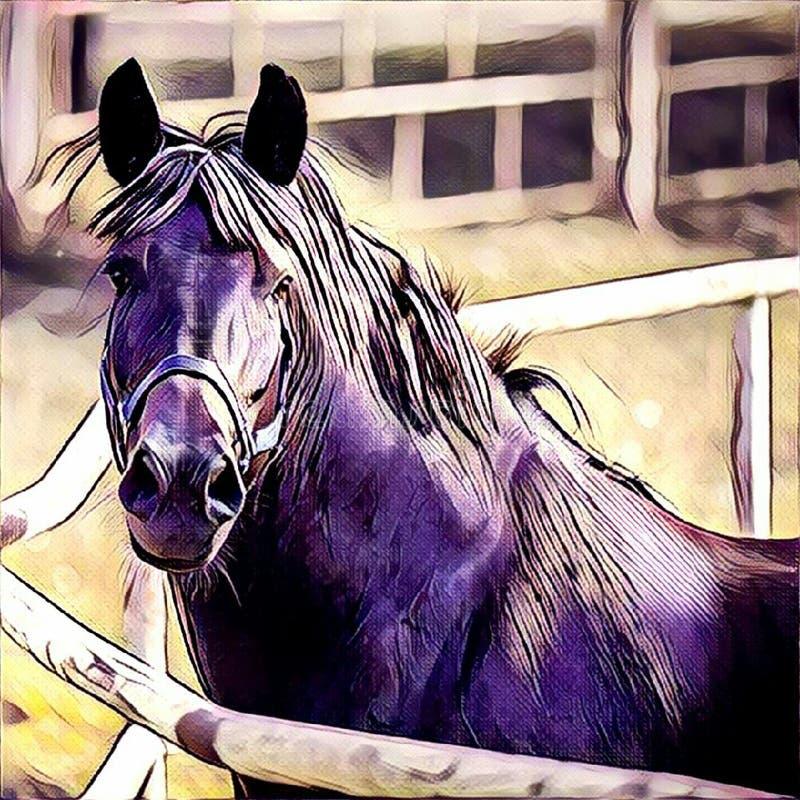 Czarny koński zakończenie zdjęcia stock
