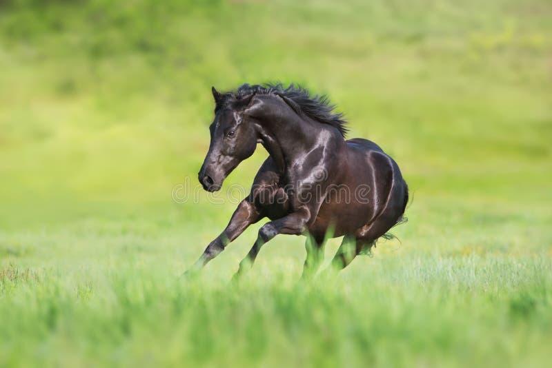 Czarny konia bieg uwalnia fotografia royalty free