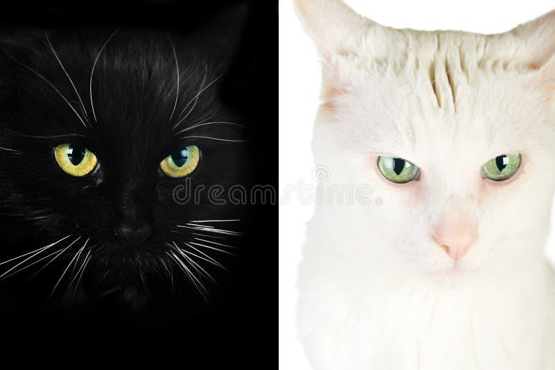 Download Czarny kot obraz stock. Obraz złożonej z koci, ssak, bokobrody - 13333315
