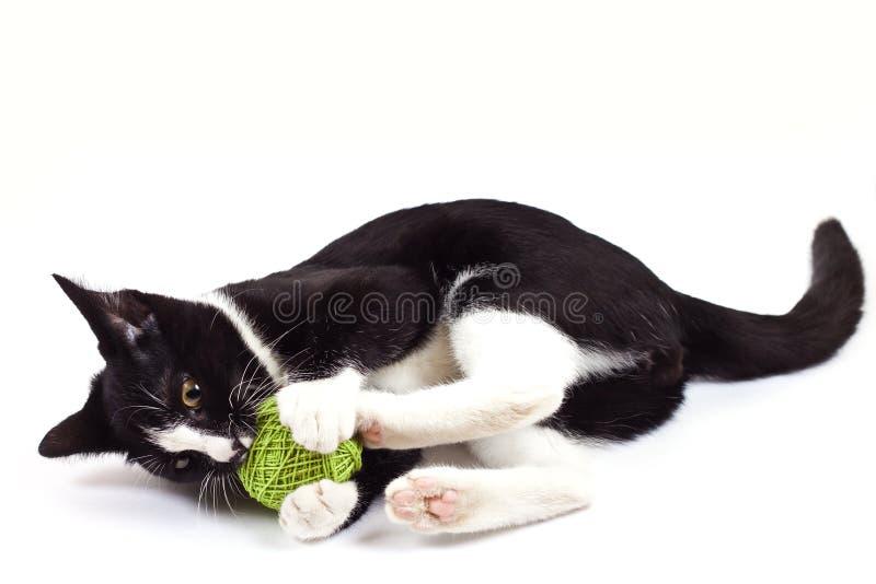 Czarny kot bawić się z zabawką zdjęcia royalty free