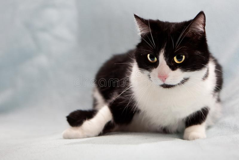 Czarny kot czarny fotografia stock