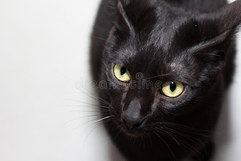 Czarny kot, Halloweenowy pojęcie Wysokiego kąta widok Domowy zwierzę domowe si fotografia royalty free