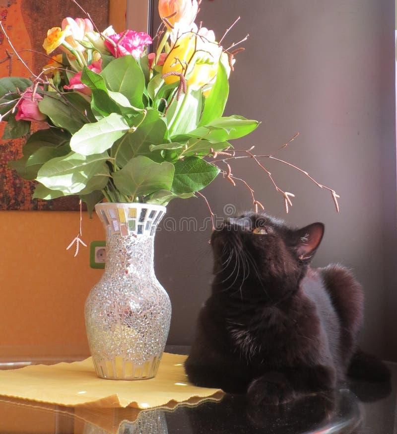 Czarny kot i bukiet kwiaty zdjęcie stock