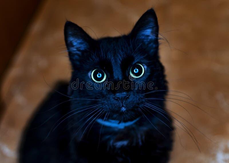 Czarny kot patrzeje prosto naprzód zdjęcie stock