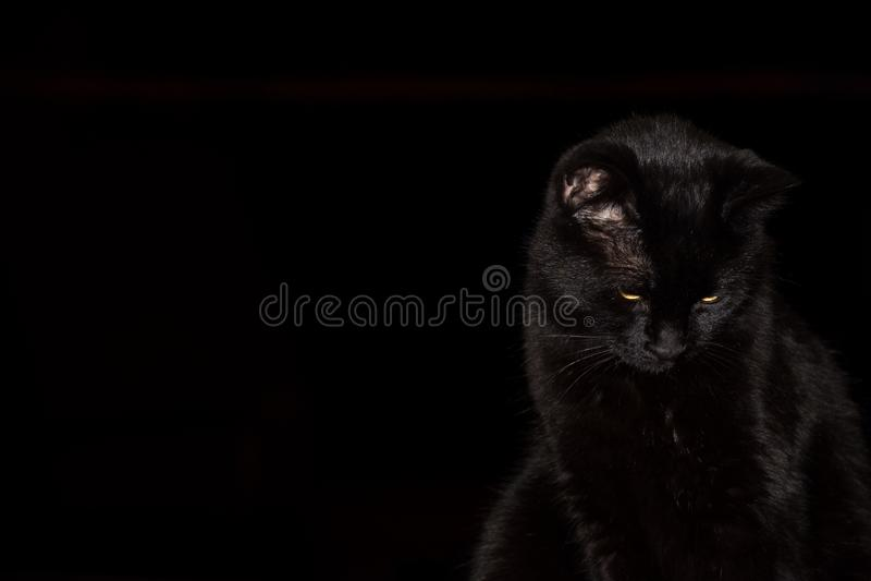 Czarny kot Przeciw Czarnemu tłu zdjęcie royalty free