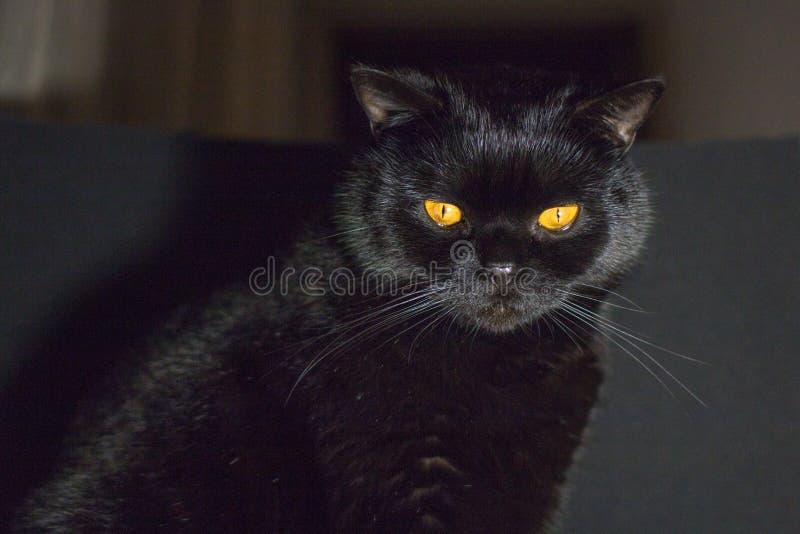 czarny kot przygląda się kolor żółty zdjęcia stock