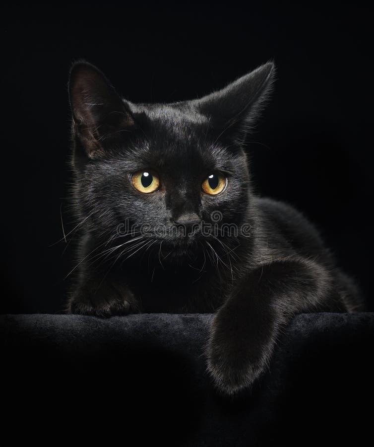 czarny kot przygląda się kolor żółty zdjęcie royalty free