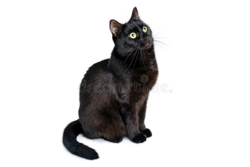 Czarny kot siedzi na białym tle zdjęcia stock