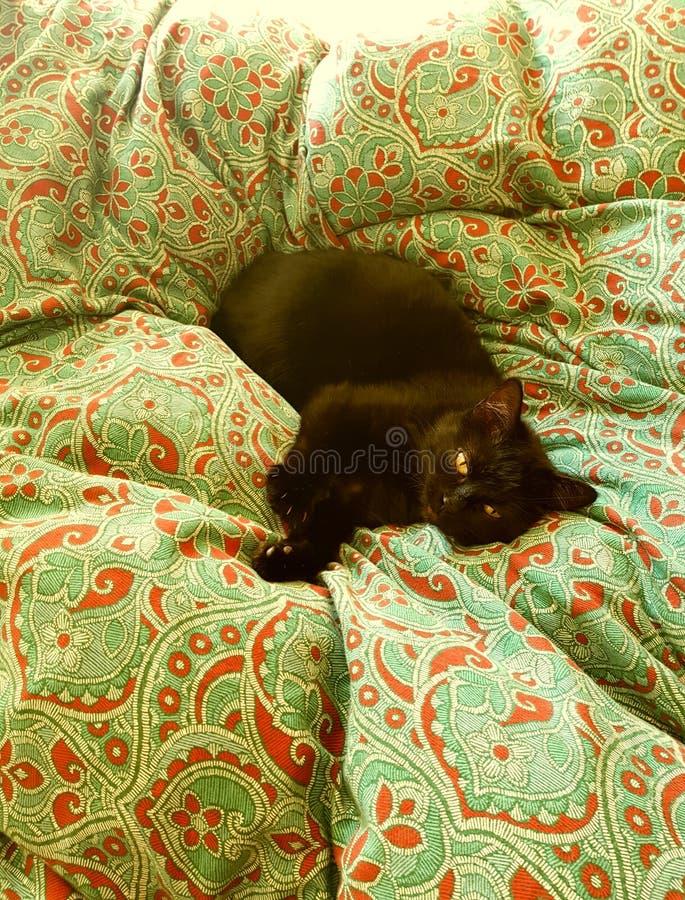 Czarny kot w łóżkowy odpoczywać obraz stock