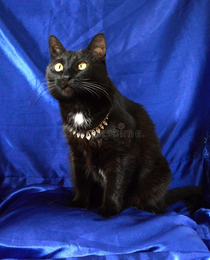 Czarny kot w kolii z rhinestones na błękitnym tle fotografia royalty free