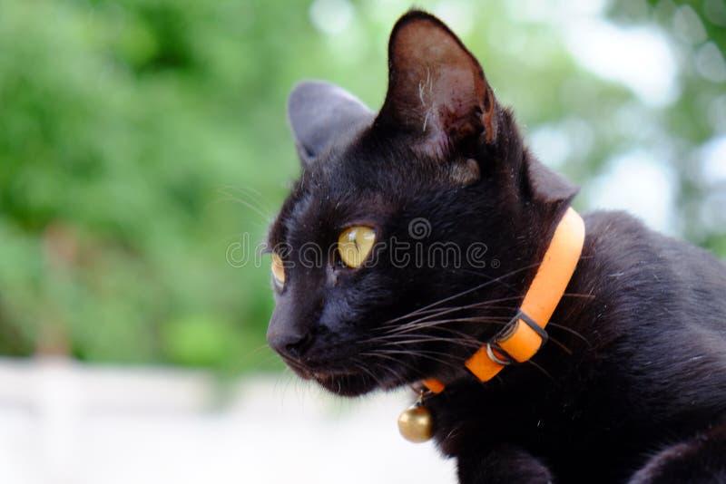 Czarny kot w ogródzie zdjęcie royalty free