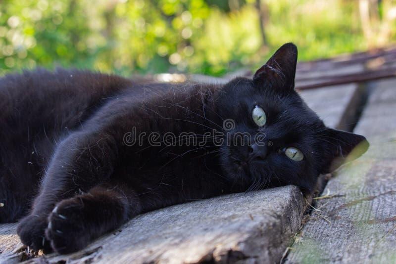 Czarny kot w ogródzie obrazy stock