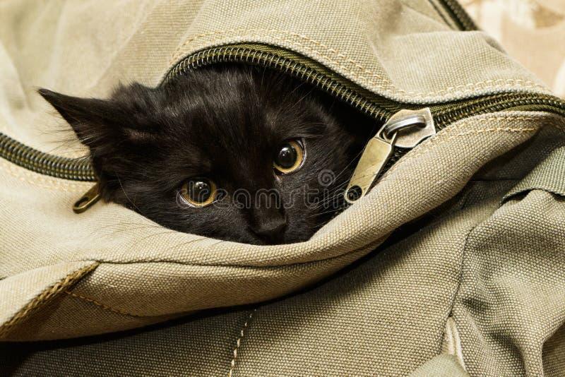 Czarny kot w plecaku obraz royalty free