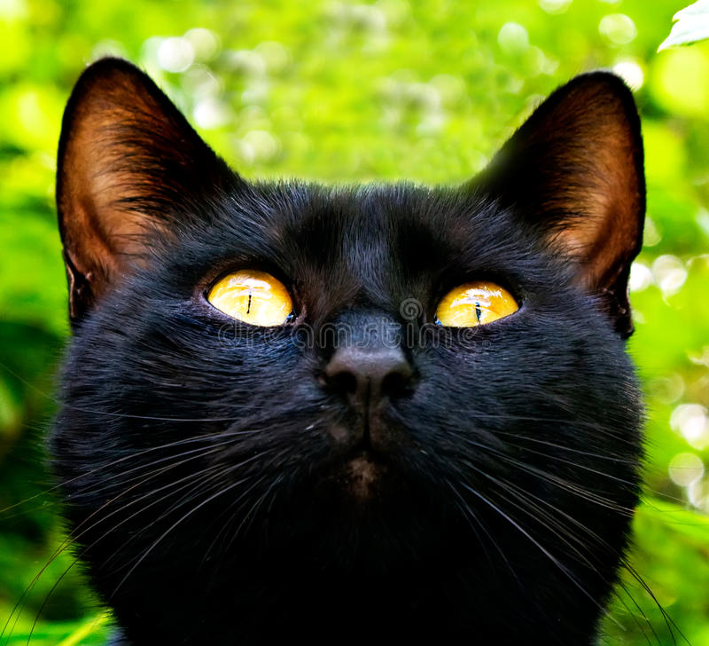 Czarny kot w ogródzie zdjęcie stock