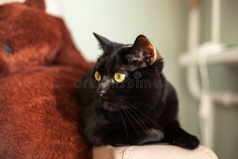 Czarny kot z żółtymi oczami siedzi na leżance obraz stock