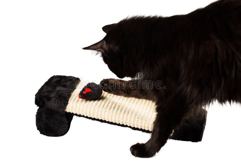 czarny kota bawić się fotografia royalty free
