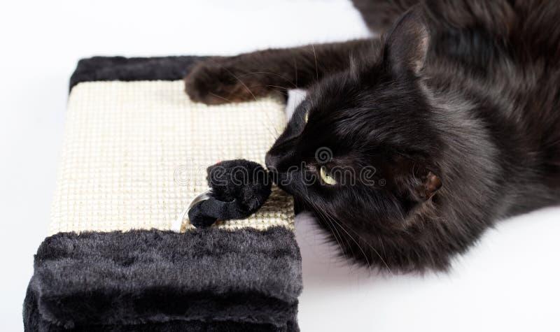 czarny kota bawić się zdjęcia stock