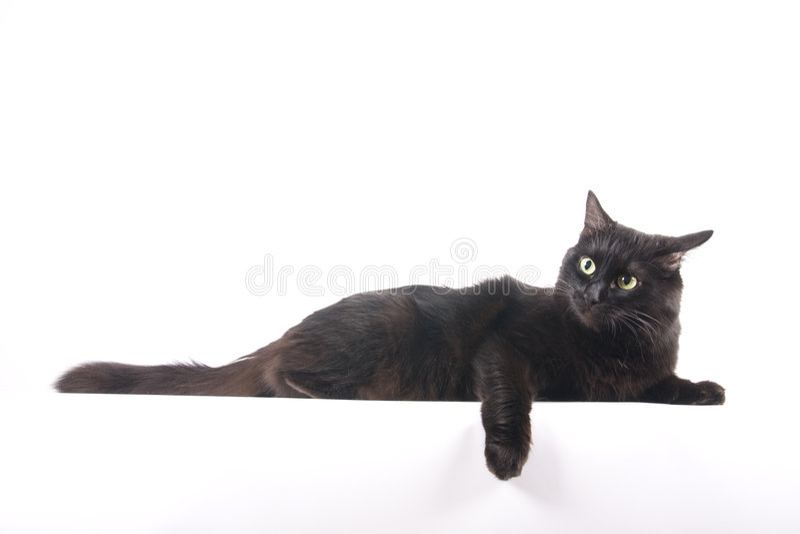 czarny kota odizolowywający kłamstwo relaksuje zdjęcia stock