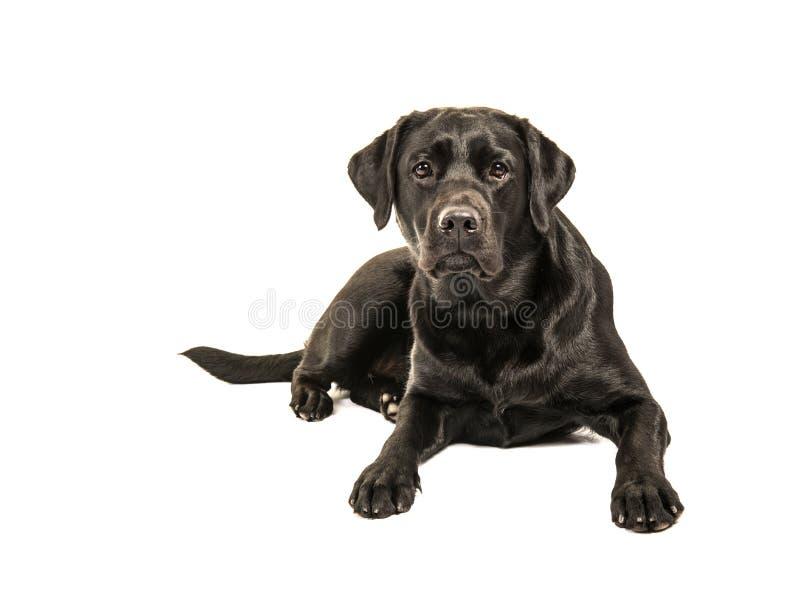 Czarny Labrador retriever lying on the beach na podłogowym obszyciu kamera jest zdjęcia stock
