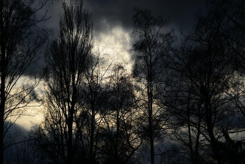 Czarny las przeciw ciemnemu niebu obrazy stock