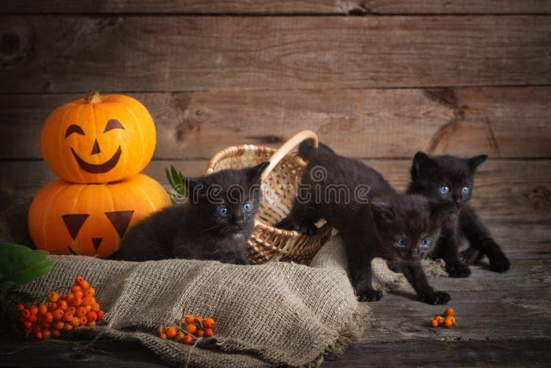Czarny mały kot z Halloween baniami obrazy stock