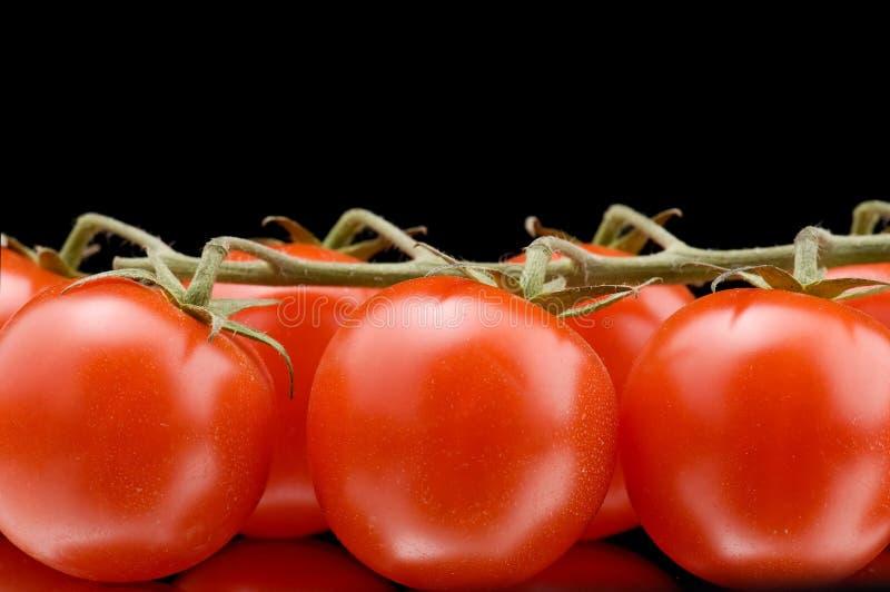 czarny makro- dojrzały pomidor zdjęcia royalty free