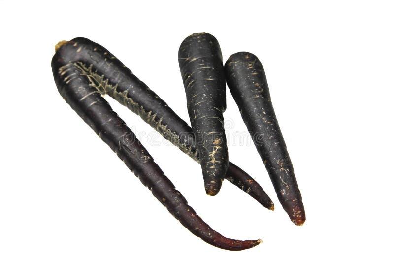 czarny marchwiany scortzonera zdjęcia royalty free