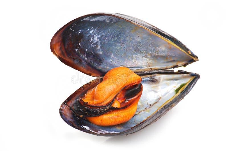 czarny mussel obrazy stock