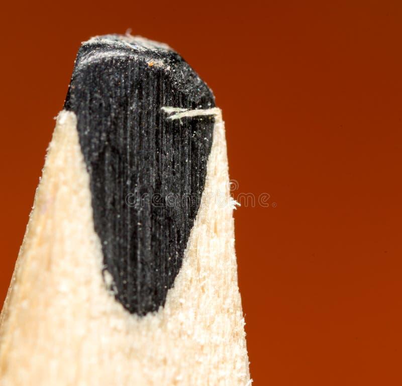 czarny ołówek 2009 kwiatów makro- lato super zdjęcie stock
