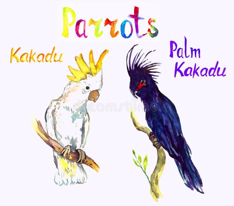 Czarny palmy i bielu Kakadu obsiadanie na gałąź, papugi inkasowe ilustracja wektor