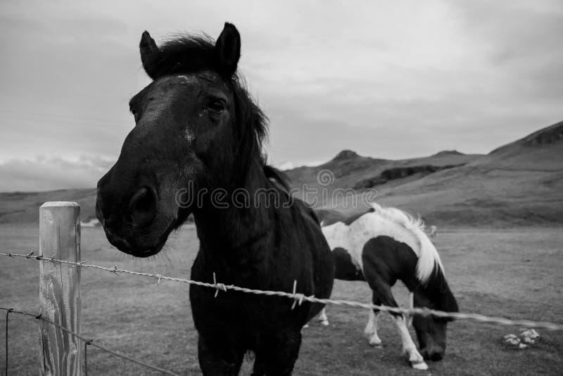 Czarny piękno zdjęcia stock