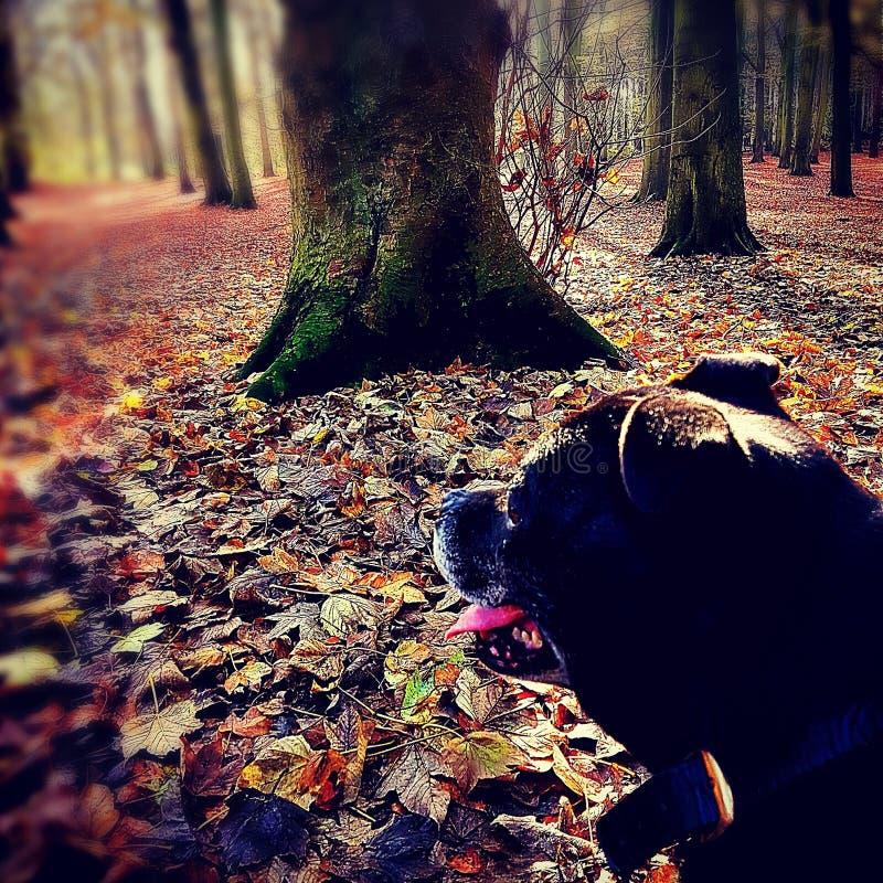 Czarny pies podziwia widok zdjęcie stock