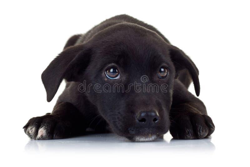 czarny pies przygląda się małego szczeniaka smutnego bezpański obrazy stock