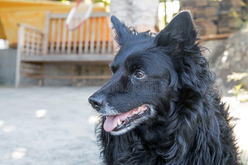 Czarny pies w jardzie fotografia stock