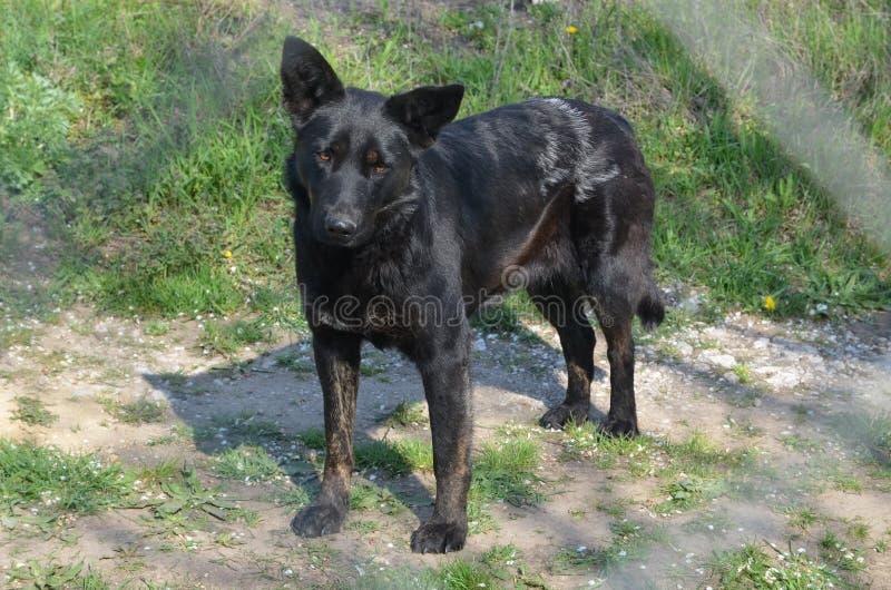 Czarny pies w ogródzie obraz stock