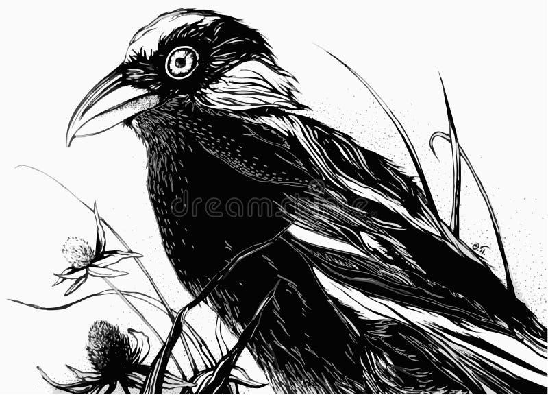Czarny ptak w polu zdjęcia royalty free