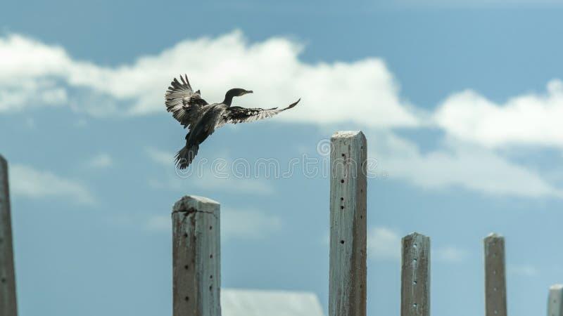 Czarny ptak fotografia royalty free