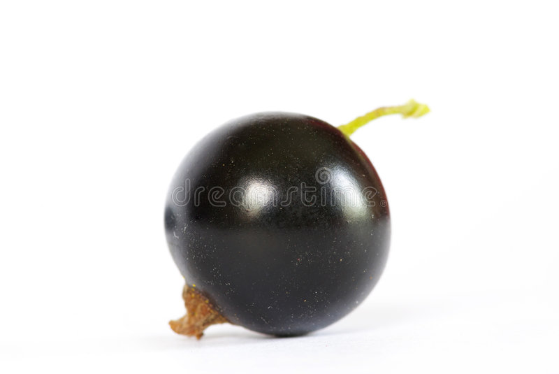 czarny rodzynek obraz stock