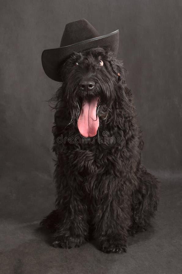 Czarny rosjanin Terrier obraz stock