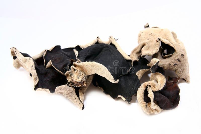 czarny sucha pieczarka zdjęcia stock