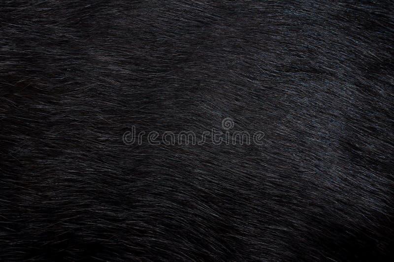 czarny tła futerko obrazy stock