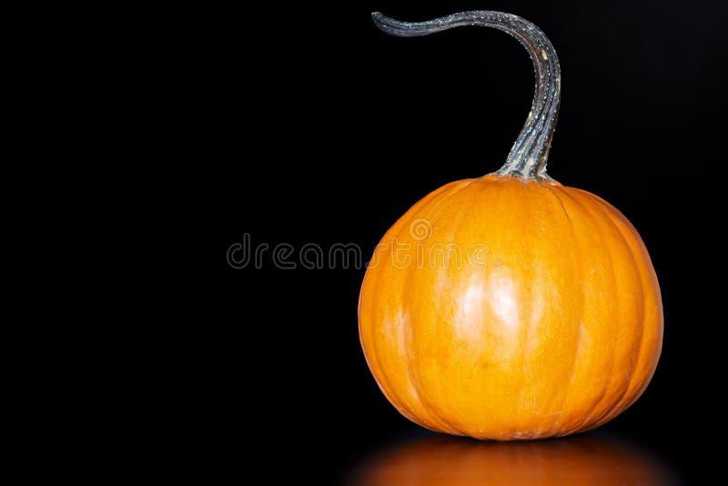 czarny tło zmrok - pomarańczowy pasztetowy dyniowy mały obraz royalty free