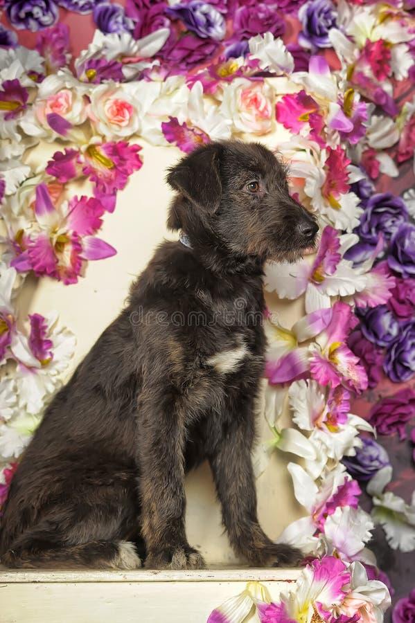 Czarny Terrier crossbreed zdjęcie stock