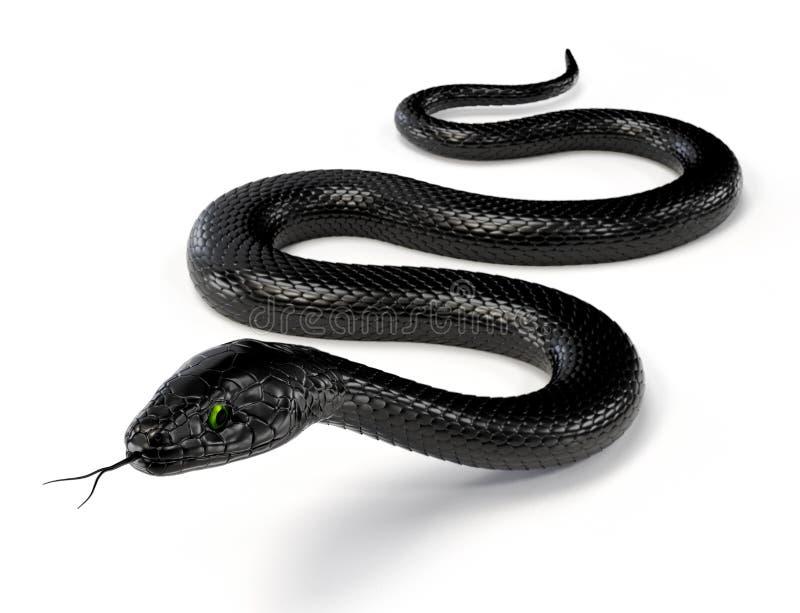 Czarny wąż III